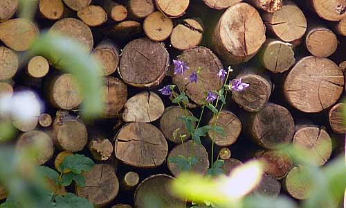 Lagerung von Brennholz